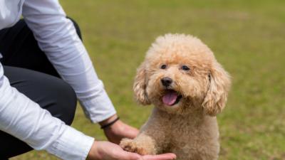 Huấn luyện chó với các bước đơn giản, dễ thực hiện