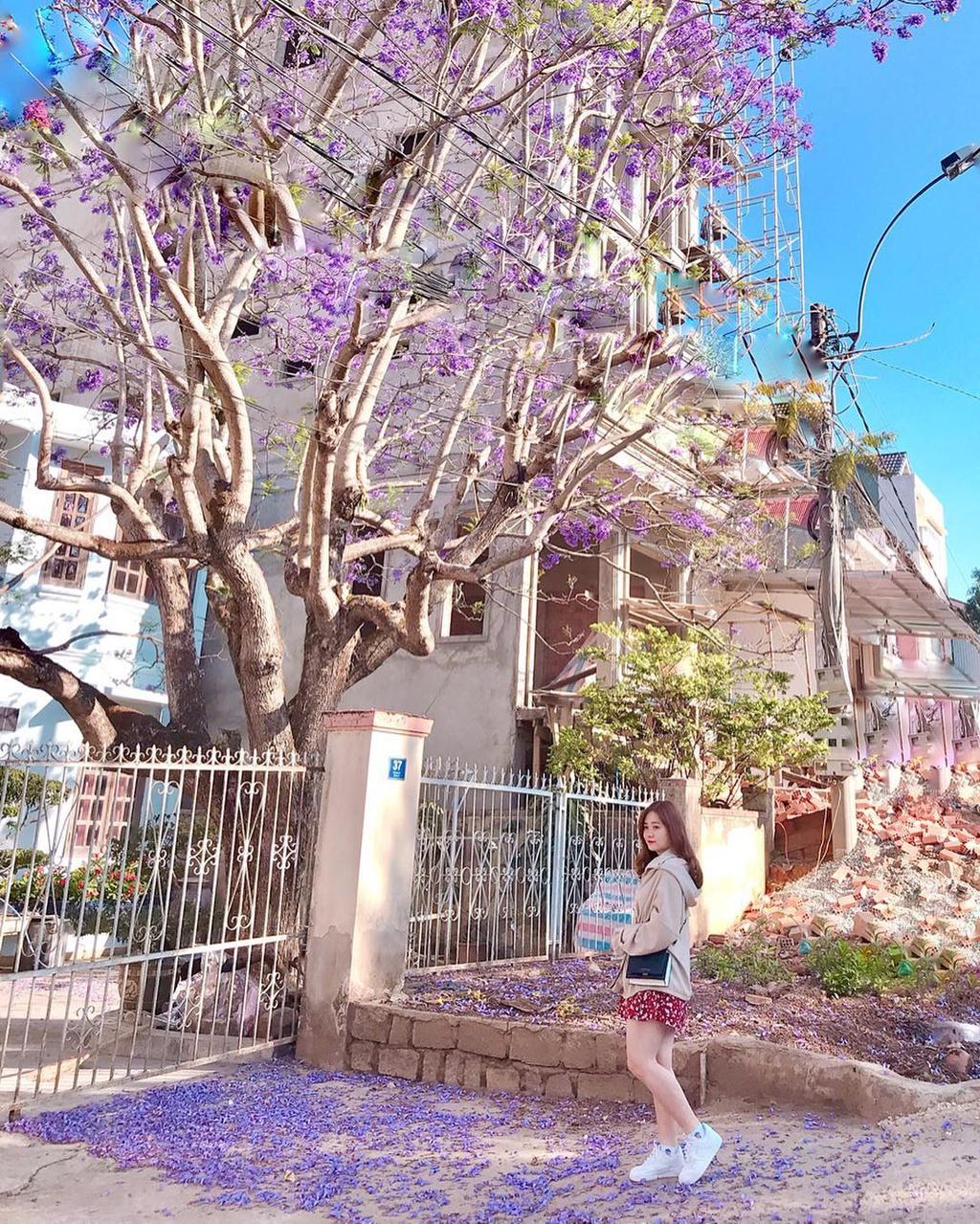 Cùng đến với Đà Lạt vào mùa hoa phượng tím